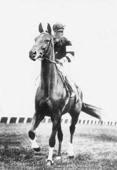 Phar Lap Watch the movie, inspiring to say the least. Beaten only by the system.