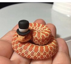 Snakes with hats. Baby Animals Pictures, Cute Animal Photos, Funny Animal Pictures, Cute Little Animals, Cute Funny Animals, Snakes With Hats, Baby Snakes, Fluffy Cows, Cute Reptiles