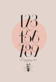 typography // ISADORA Calligraphic Font by Daniel Barba, via Behance Typo Design, Graphic Design Typography, Print Design, Branding Design, Herb Lubalin, Typography Inspiration, Graphic Design Inspiration, Plakat Design, Alphabet