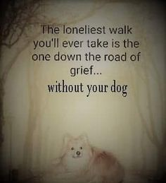 Dog Quotes, Dog Sayings, Rainbow Bridge, I Miss You, Grief, Lonely, Words, Zen, Earth