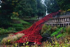 Ceramic poppies at Yorkshire Sculpture Park - travel and photograph these myself!