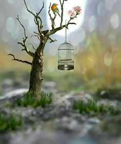 No longer caged Cool Pictures For Wallpaper, Cute Wallpaper Backgrounds, Love Wallpaper, Photo Backgrounds, Cute Wallpapers, Feather Wallpaper, Beautiful Flowers Wallpapers, Beautiful Nature Wallpaper, Beautiful Images