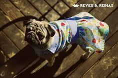 Primavera Verano / Pug / Jack Russell Terrier / Poodle / Caniche / Plaza / Juegos / Park / Happy dog / Fashion Dogs Dog Fashion, Jack Russell Terrier, Happy Dogs, Poodle, Pugs, Animals, King Queen, Seasons, Spring Summer