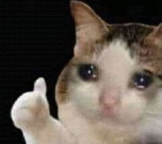 sad cat uraraka discovering and accepting herself with the help of a certain Sad Cat Meme, Cute Cat Memes, Cute Animal Memes, Cute Love Memes, Funny Animals, Cute Animals, Funny Memes, Meme Meme, Husky Meme