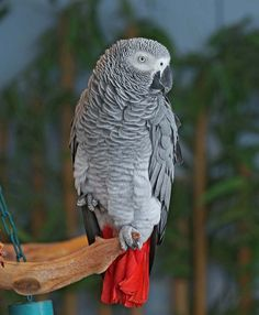 Top 10 Best Pet Birds Pionus Parrots 2. Quaker Parrots 3. Amazon Parrots 4. Poicephalus 5. Macaws 6. Conures 7. Cockatoos 8. Budgerigars 9. African Grey Parrots 10. Cockatiels