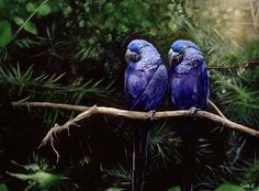 Macaw Art Painting - Twins by Steve Goad