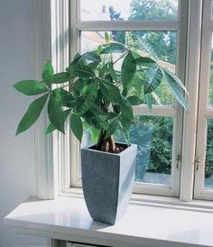 Why You Need A Money Tree - check out these tips from Hollywood Feng Shui Master - Katherine Anne Lewis.