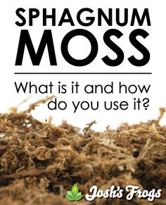 What is Sphagnum Moss and how do you use it? Helpful tips and information about using Sphagnum Moss in your vivariums and terrariums!