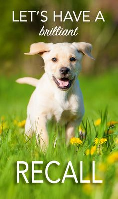 Dog Recall Training - Tips and advice for a really reliable recall, from The Labrador Site