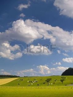 vacas lecheras: nubes blancas sobre verde agrícolas
