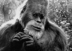 Международная экспедиция нашла в Азасской пещере  следы и шерсть йети. Собранный пакетик с волосками-шерстинками был разделен на части и отправлен для изучения сразу в три научные лаборатории: Москвы, Петербурга и американского штата Айдахо.