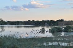 Cyprus - Nature World, Lake of Oroklini