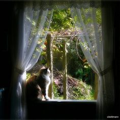 cat and the sunlight of a new day