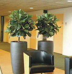 Anthracite ceramic pots Ceramic Pots, Plant Growth, Planter Pots, Bloom, Interior, Plants, Design, Ceramic Jars, Indoor