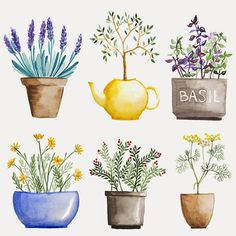 Set of watercolor herbs in pot