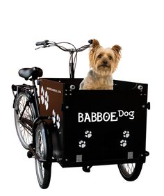 babboe dog lastenfahrrad babboe bakfiets hundeanh nger. Black Bedroom Furniture Sets. Home Design Ideas
