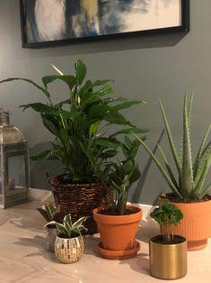 6 fine grønne inneplanter - hageterapi Planters, Plant, Window Boxes, Pot Holders, Flower Planters, Pots