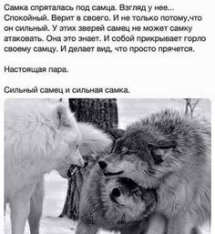 РЖОМ  Прикольные картинки, поздравления, стихи. | OK.RU Wise Quotes, Inspirational Quotes, Walk Around The World, Love Is A Verb, Russian Quotes, Touching Words, Clever Quotes, Humor, Beautiful Words