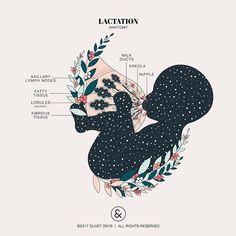Home - Designs by Duvet Days Art & Anatomy Illustrations Breastfeeding Art, Student Midwife, Duvet Day, Pregnancy Art, Pregnancy Anatomy, Pregnancy Journal, Pregnancy Belly, Pregnancy Pillow, Pregnancy Gifts