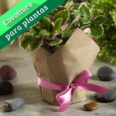 Succulent Gifts, Succulent Care, Flower Shop Decor, Table Centerpieces For Home, Balcony Plants, Flower Packaging, Orchid Care, Garden Shop, Diy Home Crafts