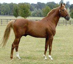 French Trotter stallion, Defi d'Aunou.