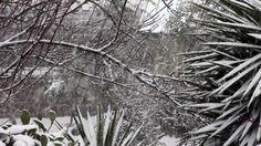 Garden Under The Snowfall - Stock Footage | by eZeePicsStudio
