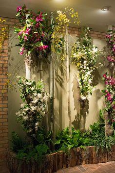 Chicago Botanic garden 2015 Orchid Show