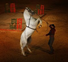 Los caballos de Rafael Peralta
