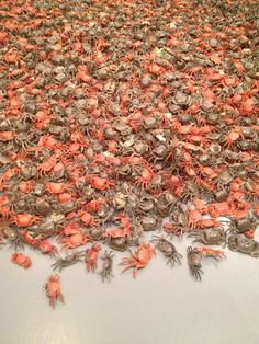 """Ai Wei Wei, @ smithsonian, wanna go so bad. This kind of crab has a name I Chinese that sounds a lot like """"fuck you"""" in chinese. Ai WeiWei directs this at the Chinese government."""