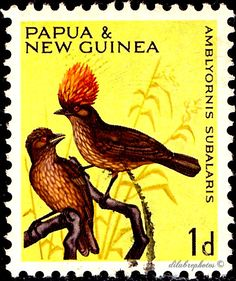 Papua New Guinea.  BIRDS IN NATURAL COLORS. STRIPED GARDNER BOWER BIRDS. Scott 188 A42.  Issued 1964 Oct 28, Photo., Uwmk. Perf. 11 1/2, 1d. /ldb.