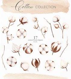 Watercolor Cotton Flower & Leaves Clipart, Floral Spring Cotton Branch Greenery Clip Art for Wedding Invitation, Scrapbooking, DIY. Watercolor Leaves, Watercolor Texture, Floral Watercolor, Watercolour, Leaf Clipart, Flower Clipart, Scrapbook Background, Butterfly Illustration, Create Invitations