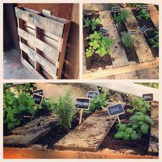 Pallet Herb Garden. Easy to do urban garden.