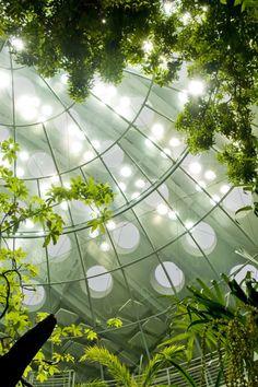 California Academy of Science. L'immenso tetto verde di Renzo Piano a San Francisco | Social Design Magazine