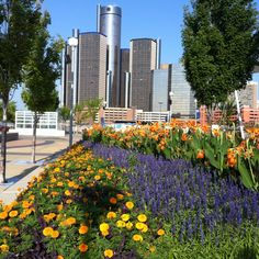 I really like the color in this picture with the Ren Cen in the background.