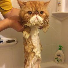 Here is 32 Cute & Funny Animals; Cute Funny Animals, Cute Cats, Funny Cats, Crazy Cats, I Love Cats, Kittens Cutest, Cats And Kittens, Kitty Cats, Animals And Pets