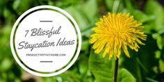 7 Ideas for a Blissful Staycation http://productivityathome.typepad.com/my_weblog/2014/08/7-ideas-for-a-blissful-staycation.html - If you're home this weekend, how will you be enjoying some free time with your family?