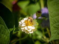 Busy bee by Dominique Toussaint on Busy Bee, Business, Nature, Flowers, Plants, Naturaleza, Store, Plant, Business Illustration