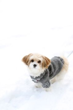 Free pattern for dog sweater - it could not be easier www.kretido.com