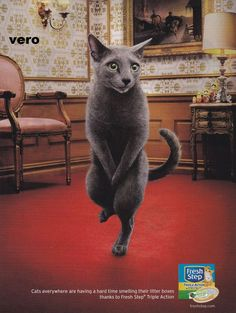 2014 magazine ad FRESH STEP CAT LITTER dancing advertisement print TRIPLE ACTION