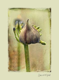 Succulents, Garden, Art, Ideas, Pictures, Garten, Kunst, Succulent Plants, Lawn And Garden