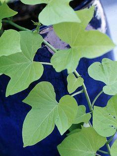 10 Sun-Loving Plants