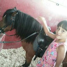 Horses, Animals, Animales, Animaux, Animal, Horse, Animais