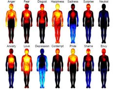 The 13 emotions plus a neutral state form a 'body atlas' of emotional topography. Getting sweaty palms or butterflies in our stomach when we feel nervous. Feeling the hot rush in our cheeks when we're embarrassed or ashamed. Having that all-over warm feeling from being in love. Our emotions produce some pretty strong effects.
