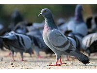 LEAP PEST CONTROLoffers the most comprehensive line of architecturally discreet, non-lethal bird control products in Durban, including custom-designed