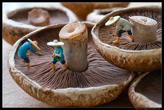 Harvesting spores to grow new mushrooms :)