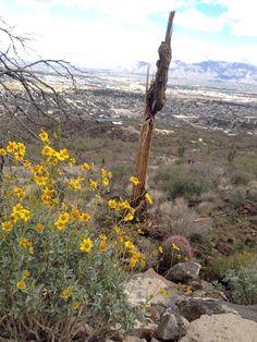 "Tucson Az desert in bloom 3/6/14 #2 ""life&death"""