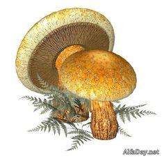 Рисованные грибы, домики из грибов - картинки, PNG Drawn Mushrooms