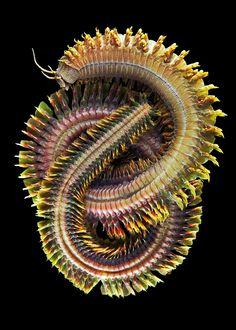 Bundled up marine worm