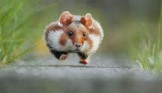 Opera Mundi - Comédia da vida animal: veja imagens finalistas do concurso que premia fotografias divertidas de bichos