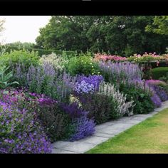I love tall billowing perennials and this herbaceous border is just perfect. It is difficult to be sure of all the plants that have been used, but it looks like assorted agastache, salvia, geranium and catmint. The palette of cool blues and purples with a touch of buttery yellow is a great combination. This is at Town Place a private garden in Sussex that is occasionally open for charity. Nicola Stocken #englishgarden #herbaceousborder #perennials #beautifulflowers #beautifulgarden…